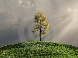Tree On A Hill Stock Photos - Image: 8344853