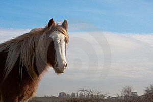 Horse Royalty Free Stock Photography - Image: 8345907