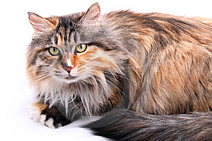 Cute Cat. Stock Photo - Image: 8348910