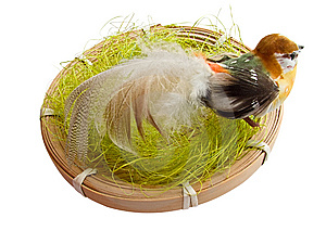 A Bird In The Nest Royalty Free Stock Photography - Image: 8350497
