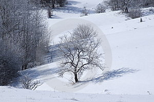 Mountain Tara Royalty Free Stock Image - Image: 8351786