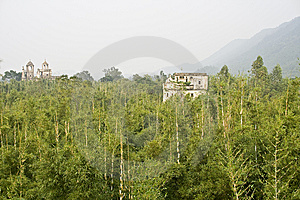 Bamboo Grove Stock Photography - Image: 8353252