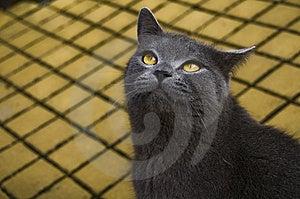 Cat Stock Photos - Image: 8357813
