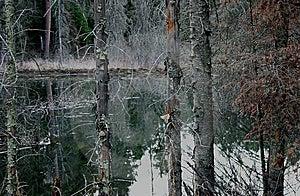 Beaver Pond Stock Photo - Image: 8365720