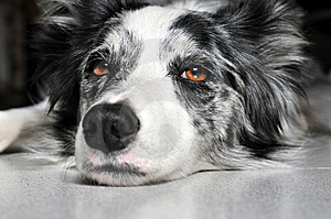 The Stare Stock Photos - Image: 8367153