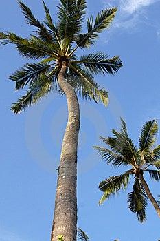 Coconut Stock Photos - Image: 8369743