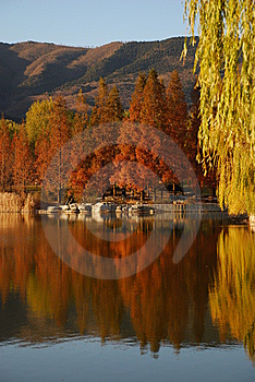 Lakeside Trees Stock Image - Image: 8370871