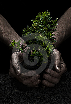 Tree In Hands Royalty Free Stock Photo - Image: 8374595