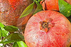 Ripe Pomegranates Royalty Free Stock Photography - Image: 8375217