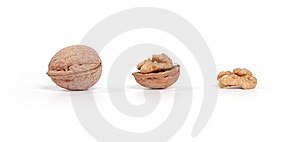 Evolution Of Nut Stock Photography - Image: 8376892