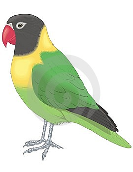 Parrot Stock Image - Image: 8377671