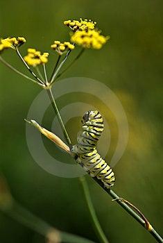 Caterpillar Lifts His Head Stock Photos - Image: 8379613