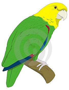 Parrot Royalty Free Stock Image - Image: 8380976