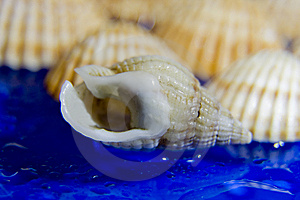 Shells Stock Photo - Image: 8381730