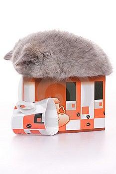 Little Kitty Stock Photo - Image: 8389260