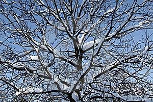 Seasonal Photo Background Stock Images - Image: 8393954