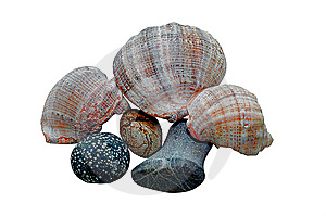 Stones And Shell Stock Image - Image: 8394951