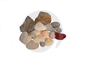 Stones And Shell Royalty Free Stock Photo - Image: 8394985