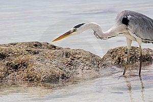 Tropical Bird Stock Photography - Image: 8395112