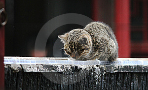 Napping Cat On The Roof Royalty Free Stock Photos - Image: 8395498