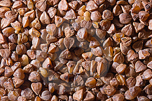 Buckwheat Stock Photo - Image: 8397440