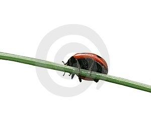 Bridge For Ladybug Royalty Free Stock Photo - Image: 8398125