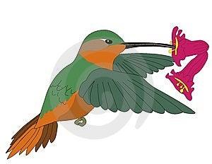 Bird Royalty Free Stock Photos - Image: 8398548