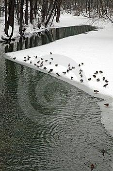 Frozen Lake Royalty Free Stock Image - Image: 8399506