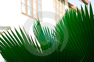 Palm Leaf Royalty Free Stock Photos - Image: 8402728
