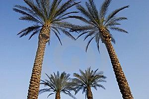 Jerusalem Palms Royalty Free Stock Photo - Image: 8404035