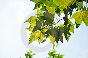 Leaf Under Sunlight Stock Photos - Image: 8404863
