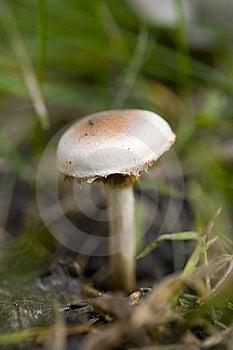 White Mushroom Macro Shot Stock Photos - Image: 8407733