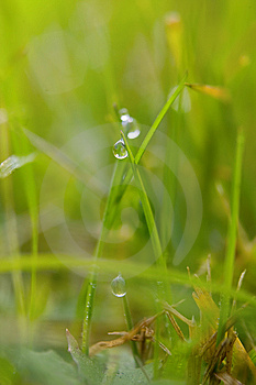 Green Grass With Dew Drops Stock Images - Image: 8407764