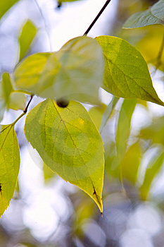 Green Leaves Background Stock Photography - Image: 8407812