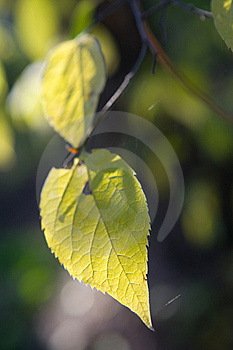 Green Leaves Background Stock Images - Image: 8407844