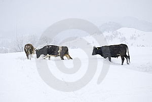 Blizzard Stock Images - Image: 8412004