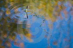 Fishing Line On Water Surface Royalty Free Stock Photo - Image: 8412025