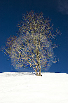 Winter Tree Royalty Free Stock Photography - Image: 8413857