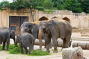 Elephants Eat Grass Stock Photos - Image: 8414243