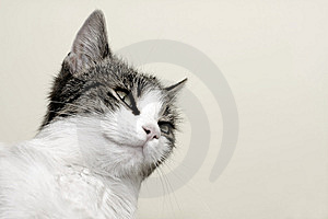 Cat Royalty Free Stock Photography - Image: 8417047