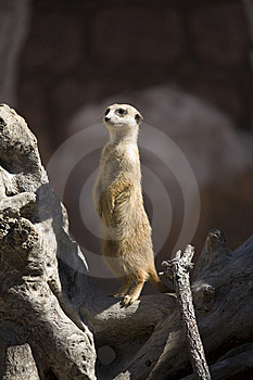 Standing Tall Stock Photo - Image: 8418020