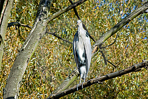 The Heron Royalty Free Stock Photography - Image: 8421677