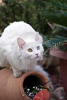 Cat Stock Photos - Image: 8422753