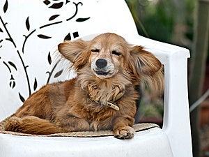 Dog Stock Photos - Image: 8422813