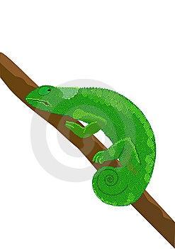 Chameleon Royalty Free Stock Photos - Image: 8426128