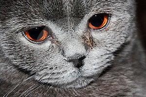 Cat Stock Photos - Image: 8426523