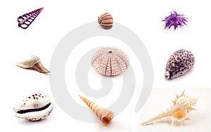 Marine Animals Stock Photo - Image: 8427120