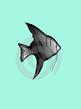 Angelfish Stock Image - Image: 8427361