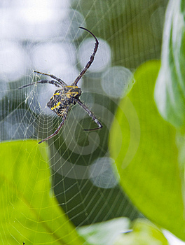 Spider On Web Stock Photo - Image: 8427800