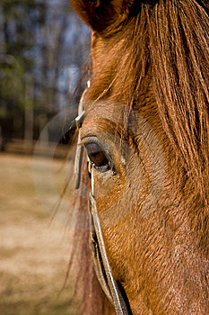 Horses Eye Stock Images - Image: 8427884